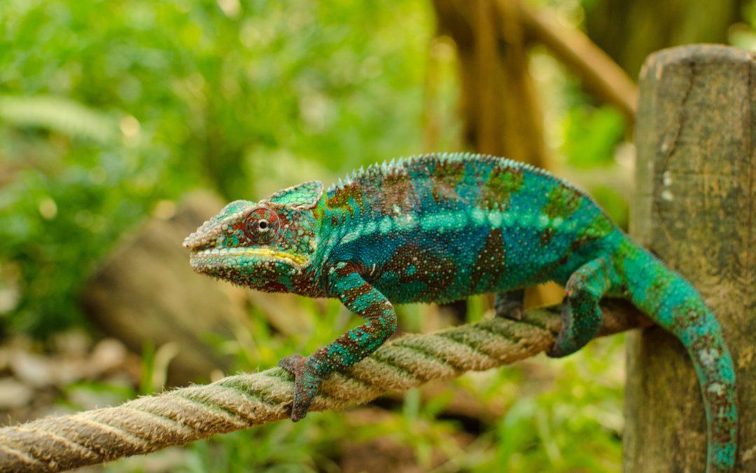 Chameleons – Farewell To Stephen Hawking